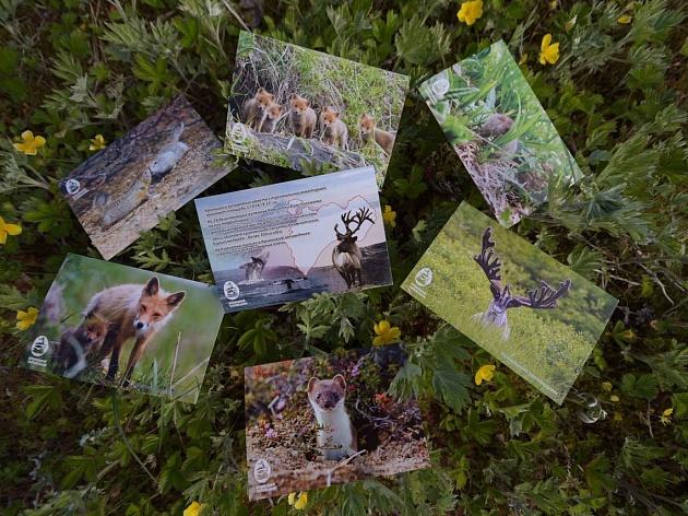 Оттиск с бурым медведем – символом Камчатки и Кроноцкого заповедника – выпущен ко Дню открытия долины реки Гейзерной