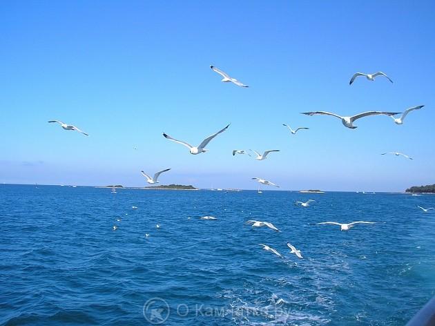 Грузопассажирский паром, который свяжет Камчатку с портами Дальнего Востока, позволит увеличить туристический поток в регион