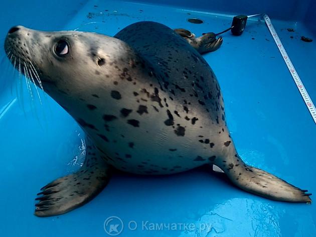 Общественная встреча, посвящённая проблеме реабилитации морских млекопитающих