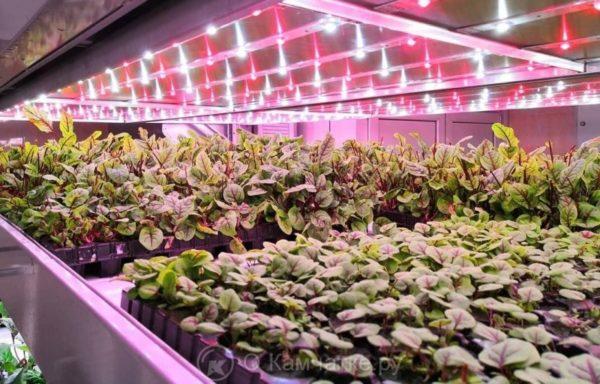 В Петропавловске-Камчатском планируется создать тепличный комплекс, построенный по технологии вертикальной фермы