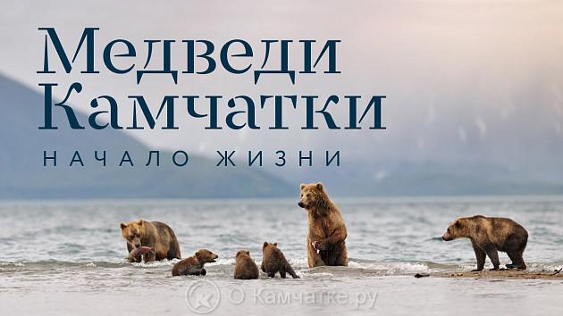 В Москве в 17-й раз прошла церемония вручения национальной кинопремии «Золотой Орел». В своей номинации победителем стал фильм «Медведи Камчатки. Начало жизни».