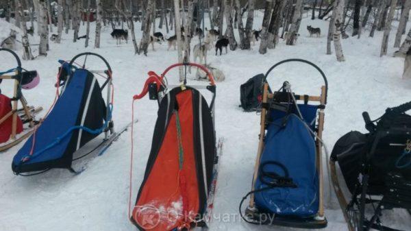 Открытый командный чемпионат и первенство Петропавловск-Камчатского городского округа по зимним дисциплинам ездового спорта пройдет в эти выходные
