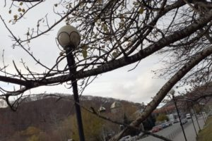 Деревья на территории, прилегающей к зданию краевого суда, будут восстановлены