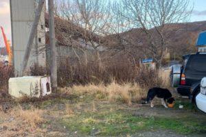 Собственников земельных участков проверяют на предмет соблюдения правил содержания животных